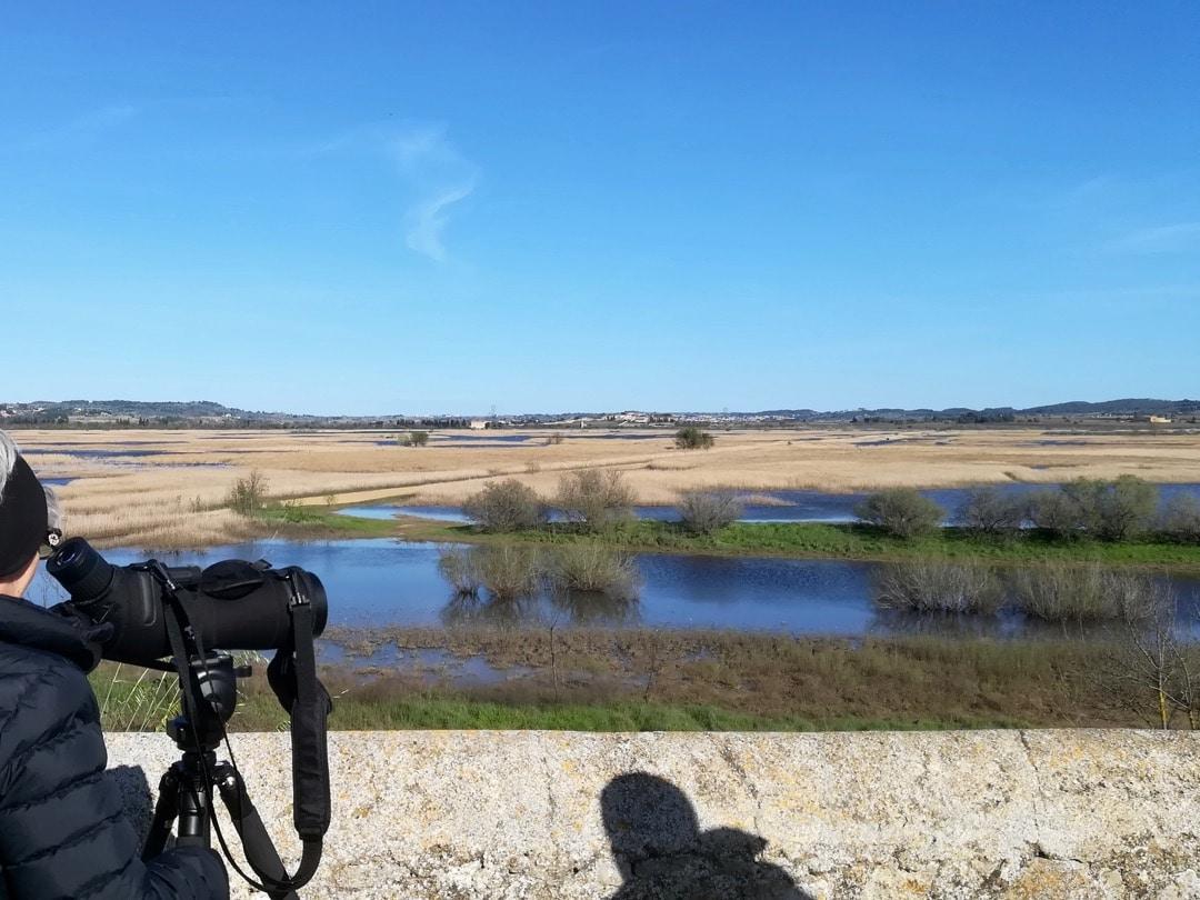 Birdwatching Capestang marshes ©KMartorell | Birding Languedoc