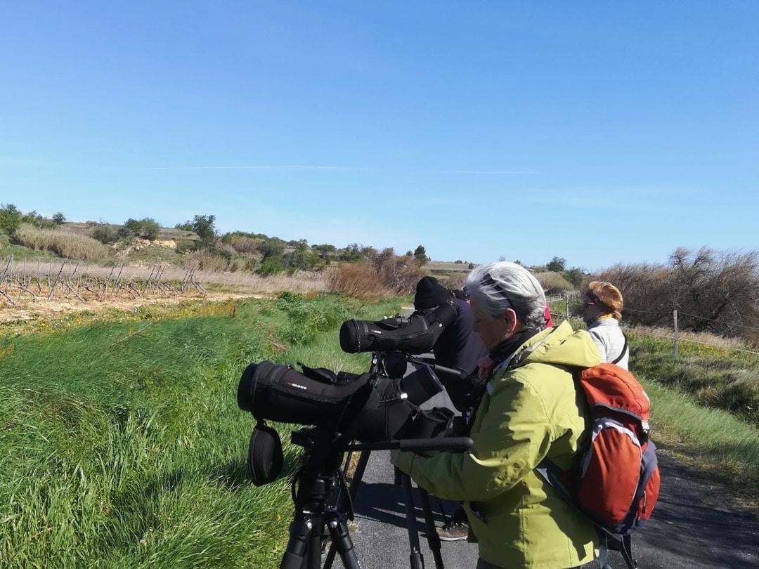 Birding day trip around Ouveillan ©KMartorell | Birding Languedoc