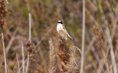 Spring migration around Leucate