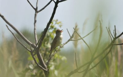 Birding day trip around Portiragnes