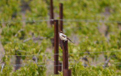 Day trip birding around Gruissan